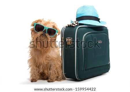 Dog ready for vacation, isolated on white background - stock photo