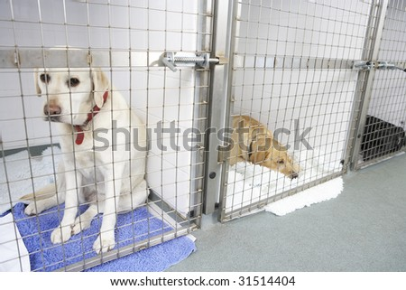 Dog Recovering In Vet's Kennels - stock photo