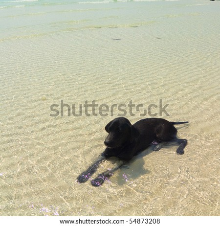 Dog relaxing - stock photo