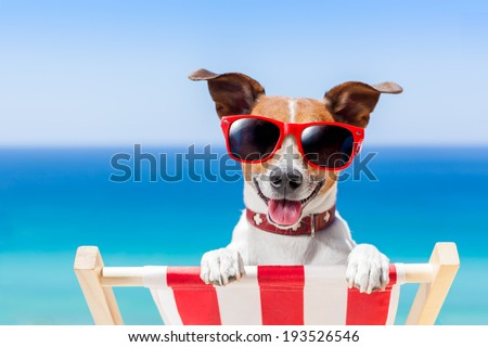 dog relaxing on a fancy deck chair - stock photo