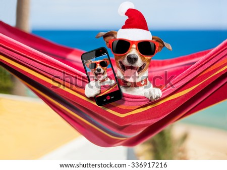 dog relaxing on a fancy red  hammock taking a selfie on christmas holidays wearing a santa claus red hat - stock photo