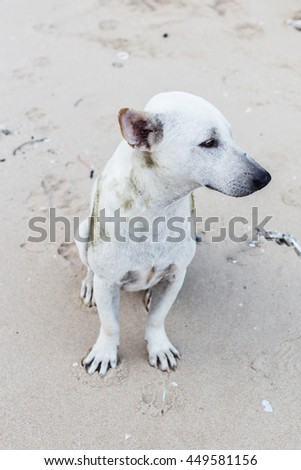 Dog relaxing on sand tropical beach