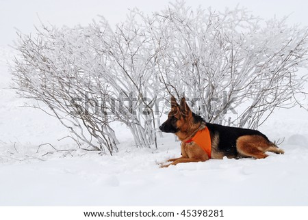 dog rescuer - stock photo