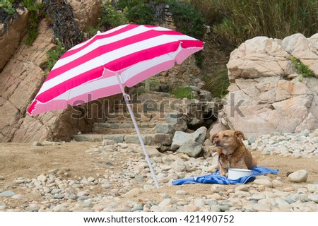 Dog resting on a bath towel at the beach - stock photo