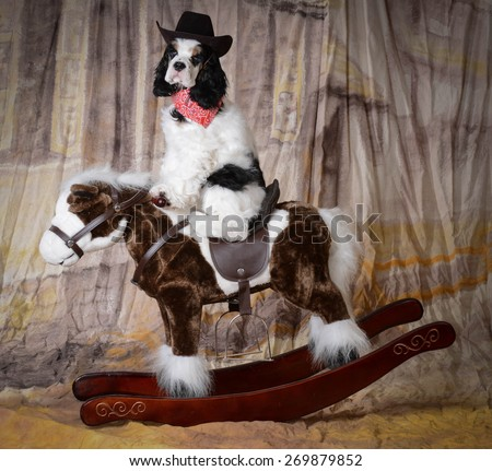 dog riding a rocking horse - american cocker spaniel puppy - stock photo