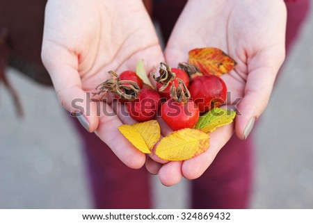 dog rose berries and yellow autumn leaves in beautiful female hands