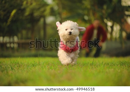 dog runing on the grass - stock photo