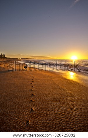 Dog running along the beach at sunset leaving paw prints on the sand