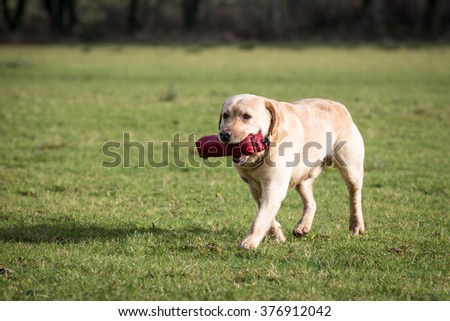 Dog Running and Playing