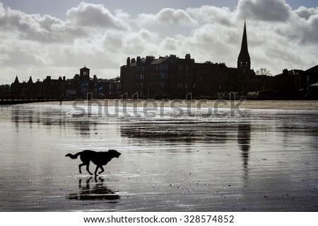 Dog running at the beach. Low tides. Scotland, Edinburgh, Portobello. - stock photo