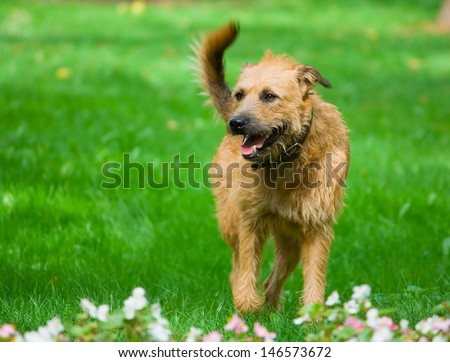 Dog running in the park - stock photo