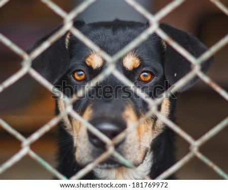 Dog`s shelter - stock photo