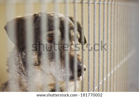 Dog`s shelter - stock photo