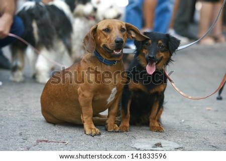 dog show dog mixed blood - stock photo
