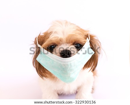 Dog sick with mask