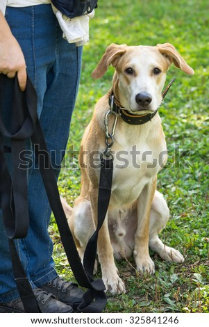 Dog siting on the grass near trainer - stock photo