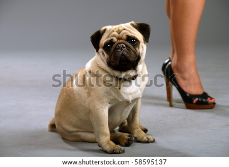 Dog sits next to her mistress - stock photo