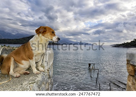 Dog sitting and observing the beach - stock photo