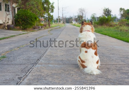 dog sitting back on the concrete road - stock photo