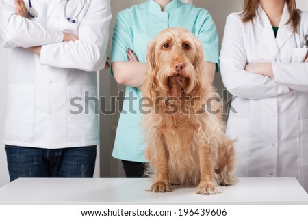 Dog sitting in front of group of young vets - stock photo