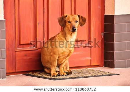 Dog sitting in front of the door - stock photo