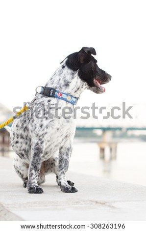 Dog sitting on a dam on the Danube - stock photo