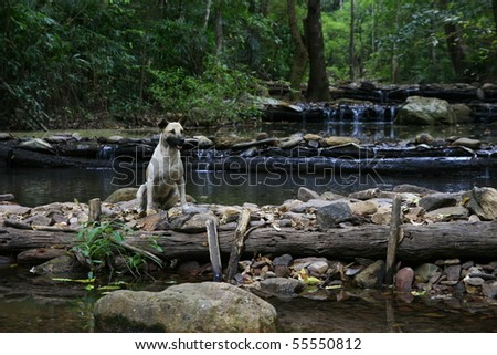 dog sitting on a weir - stock photo