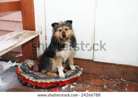 dog sitting on the porch on the mat - stock photo
