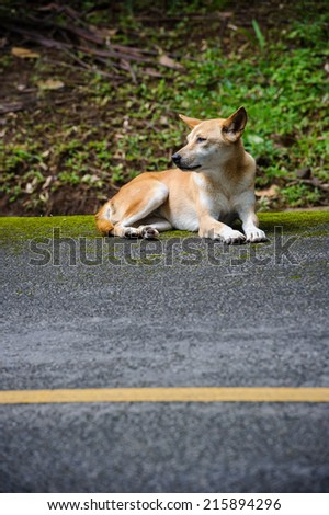 dog sitting on the road - stock photo