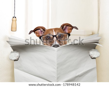 dog sitting on toilet and reading magazine - stock photo