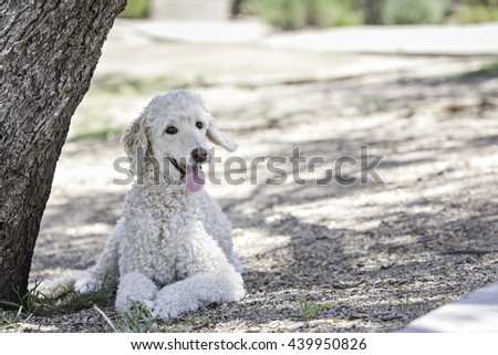 Dog sitting under a tree at the park  - stock photo