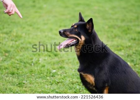 Dog sitting waiting for treat - stock photo
