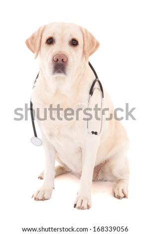 dog sitting with stethoscope isolated on white background - stock photo