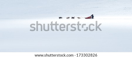 Dog sledding in the Canadian Rockies - stock photo