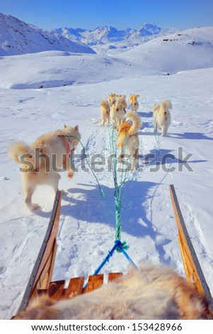 dog sledging in spring time in greenland - stock photo