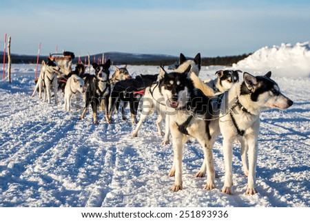 Dog Sledging in the Snow - stock photo