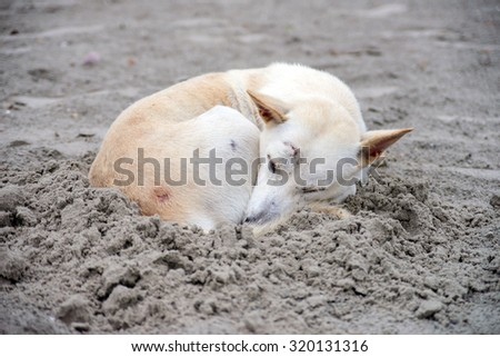 Dog sleeping on sand beach - stock photo