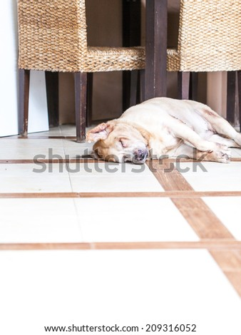 Dog sleeping on the bed - golden retriever - stock photo
