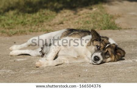 dog sleeping upside down - stock photo