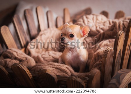dog small interior, vintage and basket vintage - stock photo