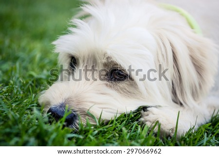 Dog smelling the grass - stock photo