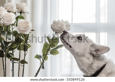 dog sniffing flowers - stock photo