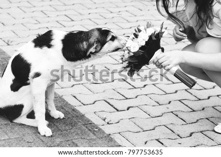 Best Sad Black Adorable Dog - stock-photo-dog-sniffs-bouquet-on-the-street-homeless-sad-dog-black-and-white-photo-wedding-bouquet-797753635  Gallery_711567  .jpg