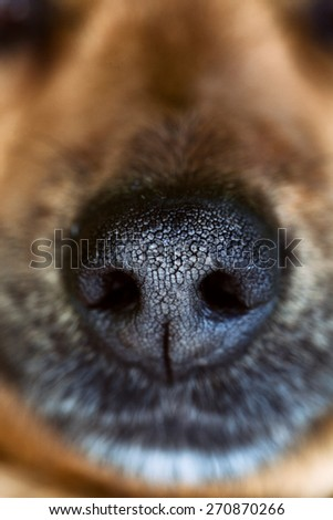 Dog snout. Dog close up. Animal nose. - stock photo