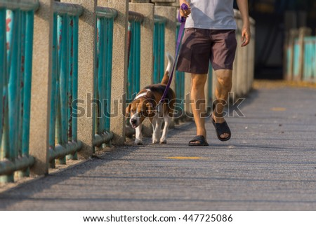 Dog so cute beagle breed walking on brige - stock photo