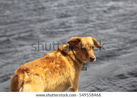 Dog standing by water