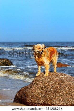 Dog standing on a rock on a beach - stock photo