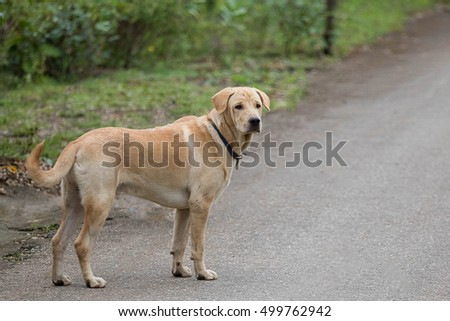 Dog standing on the concrete floor and looked at the street