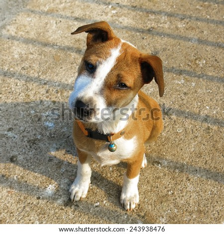 Dog staring - shallow depth of field - stock photo