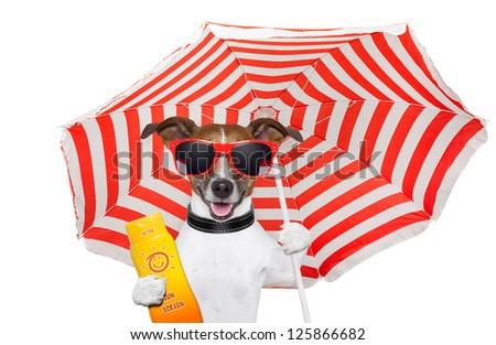 Dog summer umbrella - stock photo